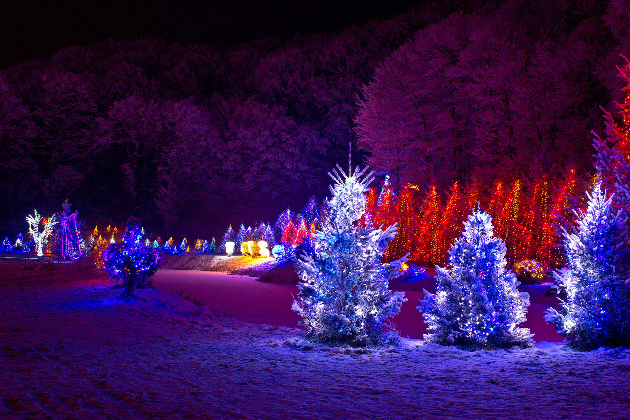Outdoor Christmas Tree With Lights.Outdoor Christmas Trees